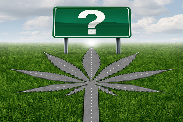 New to Cannabis? 7 Things You Need to Know